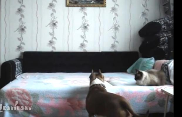 What the Dog Does When He's Alone